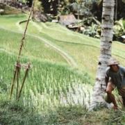 Geluk of ongeluk? Chinese boer, zoon en hun paard